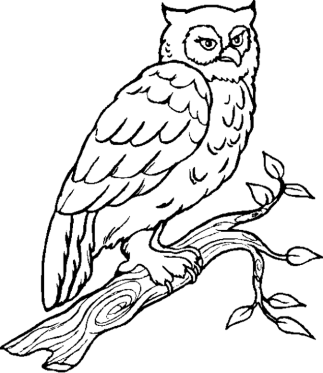 Coloring Pages Birds, Coloring Book, Coloring Owls, Embroidery Owls ...